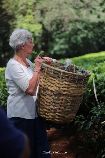 The basket tea pickers put their leaves in