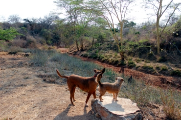 Kivu and Komosha staring at the dry river bed