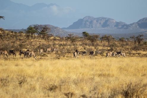 Scenes from Samburu